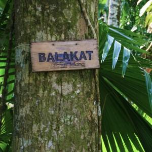 balakat-tree
